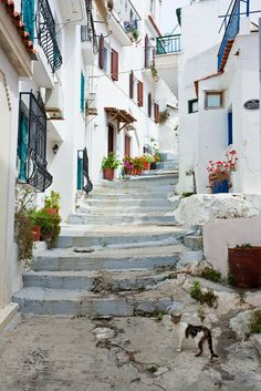 ~ been there ~ Skopelos & the cat, Greece