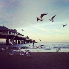 via Instagram bastarts: #seagulls #seebrücke #ostsee #überwasser #seemöwe #bansin #heringsdorf #sea #meer