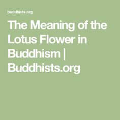 The Meaning of the Lotus Flower in Buddhism | Buddhists.org
