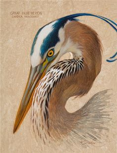 Bird Drawings, Animal Drawings, Audubon Prints, Piano Art, Wildlife Paintings, Bird Artwork, Selling Art, Art Auction, Artist Art