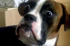 45 Awkward & Guilty Doggies That Will Make Your Day • Page 33 of 85 • FRANK151