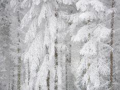 Haldon Forest in Snow 17