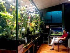 Interior Design Living Room, Living Room Decor, Bedroom Decor, Aquarium Design, Aquarium Ideas, Vivarium, Sustainable Design, Indoor Plants, Interior And Exterior