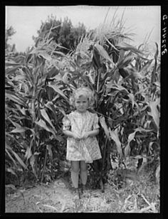 August 1940, Sweet corn and daughter of a Mormon farmer. Snowville, Utah