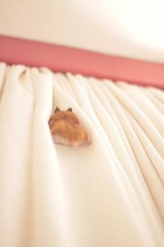 climbing the curtains!