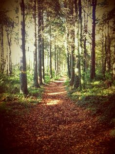 Forests, The Locals, Trail, Seasons, Autumn, Plants, Fall, Woodland Forest, Seasons Of The Year