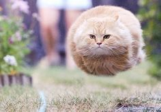 Torpedo cat!