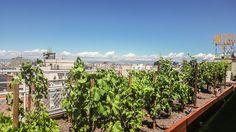 ¿Se puede cultivar un viñedo en las alturas? Sí, en Madrid hay uno y te desvelamos su secreto  http://feeds.weblogssl.com/~r/directoalpaladar/~3/8-W2hzQfUZk/se-puede-instalar-un-vinedo-en-las-alturas-si-en-madrid-hay-uno-y-te-contamos-su-secreto