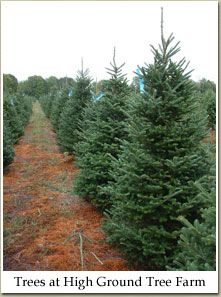 Dave Black's High Ground Tree Farm for the most beautiful Frasiers