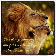 Love always need support also if it seems the strongest. by #Sofarloio #Lions #love