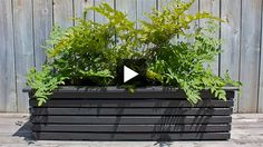 """Build a chic and affordable wooden planter box with cuts of spruce, nails and a few coats of dramatic grey paint, with instructions from H stylist Peter Paquette. The rectangular box houses three basic 12"""" plastic pots, and would look great on a back deck or as a divider wall on a cramped condo balcony. Fill it with fresh greenery such as evergreens, flowering pots, or ferns."""