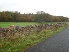 Estate boundary wall of The Hall erected Mountcharles, County Donegal - Photo credit, Buildings of Ireland Boundry Wall, Coping Stone, Gates And Railings, Double Gate, Metal Gates, Stone Masonry, Dry Stone, Donegal, Beach Waves