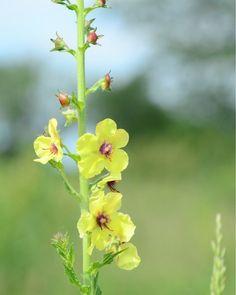 Fine Art Photography Botanical Yellow by KarenWebbPhotography, $29.00