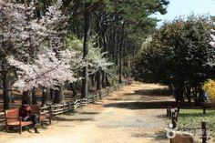 韓國不是只有首爾釜山,蔚山的景色也很美麗