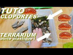 Terrarium, Aquarium, Terrariums, Goldfish Bowl, Aquarium Fish Tank, Aquarius, Fish Tank