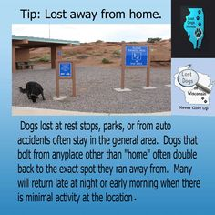 Tips for dogs lost away from home  http://www.lostdogsillinois.org/