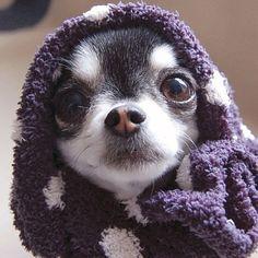 fuzzy cuteness