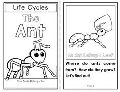 Use this ant diagram during a unit on insects. Students