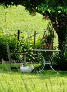 DollyParton is wandering around the garden again, she needs to go back to the little coop..............