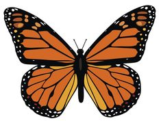 Monarch butterfly vector....this butterfly would be good to paint on the welcome sign that Heather wants.