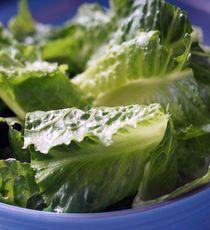 Great romaine lettuce benefits health including seasonal