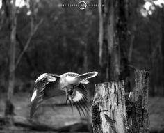 koobnw-7100392 | by Cyril Jezek Photography