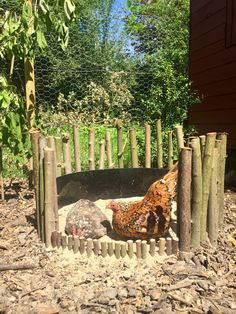 Welcoming the hens to their shabby chic chicken coop Backyard Chicken Coop Plans, Chicken Garden, Diy Chicken Coop, Chickens Backyard, Keeping Chickens, Raising Chickens, Farm Animals, Animals And Pets, Duck Coop
