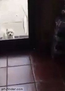 Bob Cat Pet Gif Finder – Find and Share funny animated gifs - health , health life, health world Cute Funny Animals, Funny Animal Pictures, Funny Cute, Funny Dogs, Cute Pictures, Cute Puppies, Cute Dogs, Cute Creatures, Animal Memes
