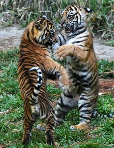 All These Animals Want To Do Is Dance Photos) - World's largest collection of cat memes and other animals