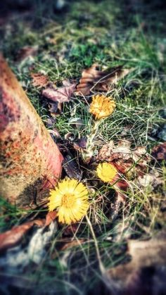 Wiosna tuż