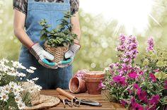 Flores de inverno - Dicas de decoração - Revista Westwing