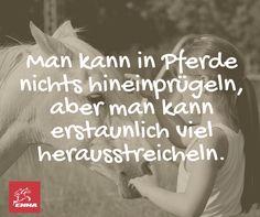 MAN KANN AUS PFERDEN NICHTS HERAUSPRÜGELN..... LIKE EMMA BESUCHE www.emma-pferdefuttershop.de