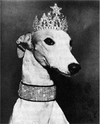 Greyhound Princess