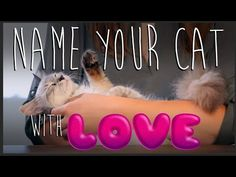How to Name Your Cat Using Love - YouTube