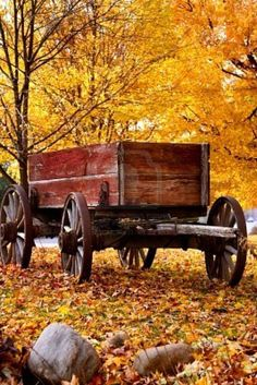 Antique Wagon and autumn colora. I would live to live somewhere where I can experience fall colors and have a wagon like this as backdrop for family portraits Old Wagons, Autumn Scenes, Seasons Of The Year, Happy Fall Y'all, Happy October, Happy Tuesday, November, Fall Pictures, Fall Photos
