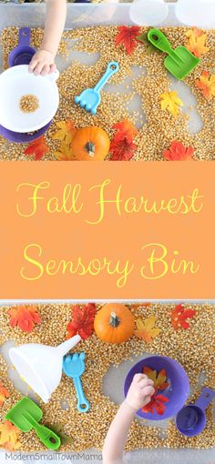 Fall Harvest Sensory Bin – - Fall Crafts For Toddlers