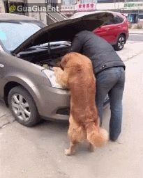 Der Hund, des Menschen bester Freund und Helfer!