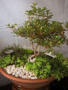smallweeds - miniature gardens G a l l e r y - DIY Fairy Gardens
