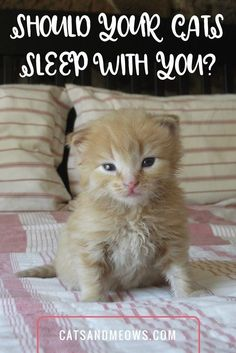 Letting your cats snuggle in your bed at night is a personal decision, with many pet parents either firmly for or against the practice. #ilovemycat #lifewithcats #indoor car #happycat #familypets