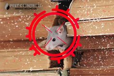 Solve the problem with the help of us. We are one of the known control providers in Rodents, Pest Control, New Zealand, The Help, Bed Bugs Treatment