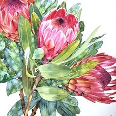 Protea Watercolor Print Watercolor Protea Painting Home Decor Floral Illustration Protea Art Protea Plant Wall Art Protea Giclee Art Print Protea Art, Art Watercolor, Watercolor Flowers, Art And Illustration, Art Floral, Flower Art Drawing, Drawing Art, Australian Art, Botanical Art