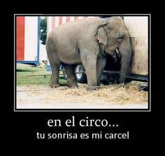 No a los espectaculos con animales!!!