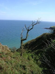 Photo of the Week – Beautiful and bleak Lundy Island off the North Devon Coast in UK