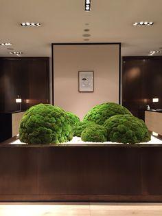Indoor Garden, Indoor Plants, Island Moos, Moss Decor, Moss Art, Moss Garden, Bonsai Art, Green Architecture, Arte Floral