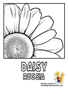 see coloring flower pictures of world governments panama venezuela free flower printouts of official flower blossoms like panama orchid spain carnation