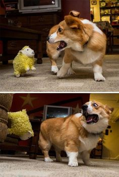 30 Funny Dogs Pictures | Funny Dog | DomPict.com