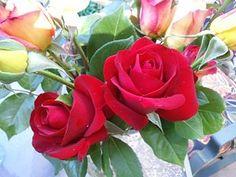 Da Roses