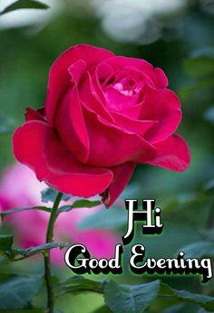 Red rose flower in a garden Free Photo Flower Images Hd, Rose Flower Photos, Red Rose Flower, Beautiful Rose Flowers, Love Flowers, Red Roses, Good Morning Rose Images, Good Morning Roses, Rose Flower Wallpaper