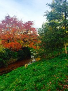 Autumn in Sefton Park