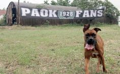 PAOK | Boxer Dogs, Animals, Animales, Animaux, Doggies, Animal, Animais, Dieren, Pet Dogs